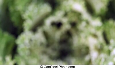 green head of cabbage - focusing and slow approach to centre...