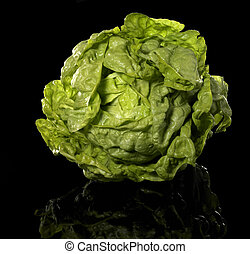 green head of lettuce