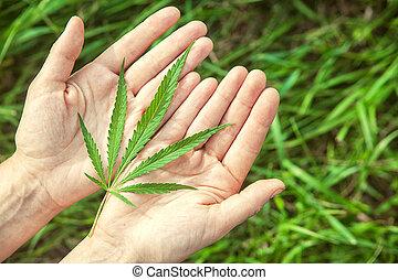 green hemp s on the hands