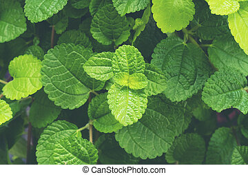 green herbs leaf