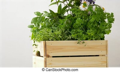 green herbs or spices in wooden box on table - gardening,...