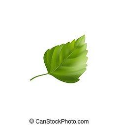 Green Hibiscus Leaf