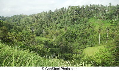 Green Hill, Palm Tree and Jungle in Ubud, Bali, Indonesia -...