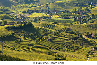Green hills and vineyards of Langhe in early spring morning in Piedmont, Italy (view from above).