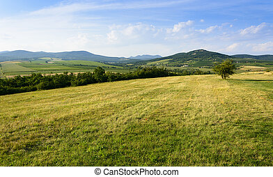 Green hills near Sarospatak in Hungary Tokaj region