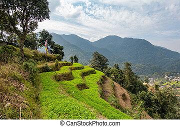 Green Hillside Terraces