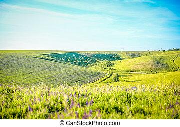 Green hilly Ukrainian landscape on sunny day