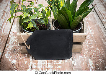 Green home garden plants in wooden box