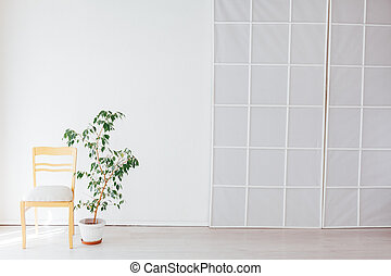 green home plant in the interior of a white empty room