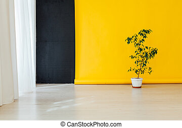 green home plant in the room with a yellow background