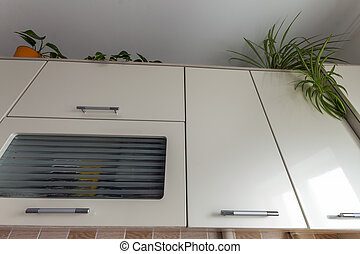 Green home plants on top of modern contemporary kitchen cupboards