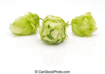 Green hop cones on a white background