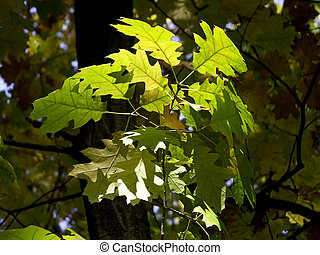 Green hope - Green leaves glowing in the sun light
