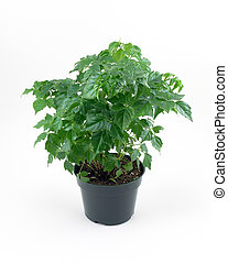 Green House Plant - Green house plant over white
