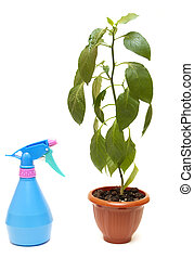 Green house plant in a pot
