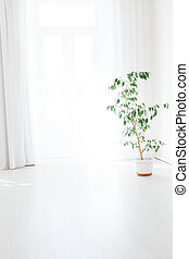 green house plant in a pot stands in a white room