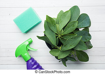Green house plant in a pot with a spray and a cleaning sponge on a white table.