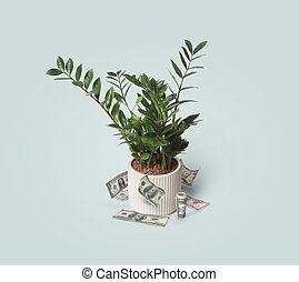 Green house plant with dollar bills