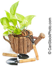 Green houseplants in pot with garden tools on white background