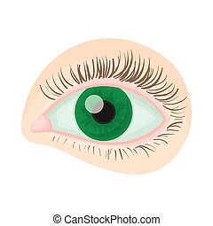Green human eye icon, cartoon style