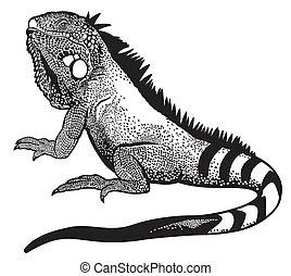 green iguana lizard male, black white illustration