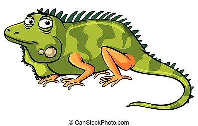 Green iguana on white background