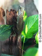 Green iguana sitting on tree trunk.