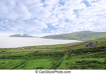 green irish fields and islands view - scenic view in kerry...