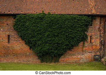 green ivy growing on a wall