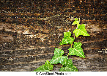 green ivy growing on wooden fence