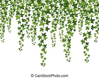 Green ivy. Hanging from above creepers with leaves, lush climbing plants garden decoration wall, website banner vector background
