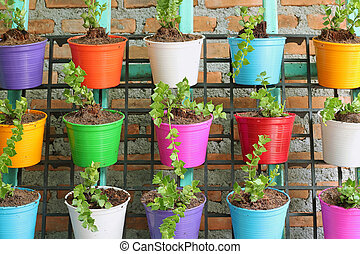 green ivy in colorful pots