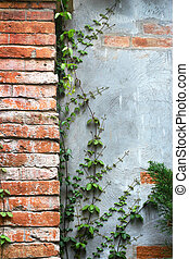 Green ivy leaf on the wall