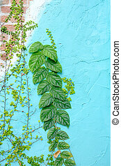 green ivy on blue wall