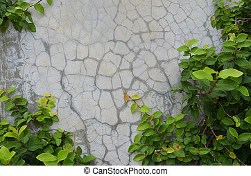 green ivy on cement wall