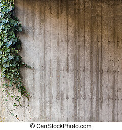 Green ivy on concrete wall