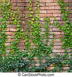 green ivy on orange wall