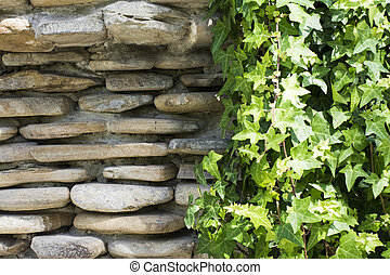 green ivy on rock wall