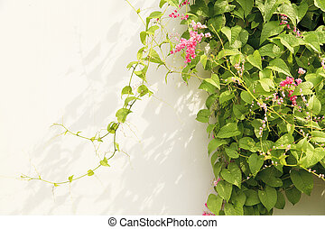 Green ivy on the wall