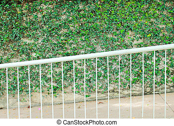 Green ivy on wall with slope pathway