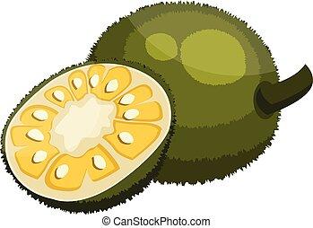 Green jackfruit cut in half vector illustration on white...