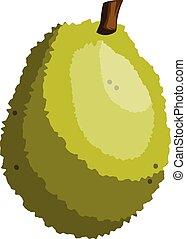 Green jackfruit vector illustration on white background.