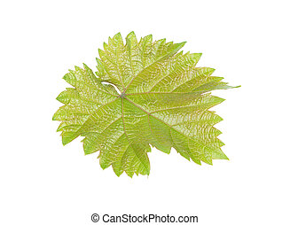 green juicy grape leaf isolated on white background