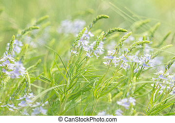 Green juicy grass and gentle blue flowers in the field on a sunny day
