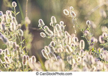 Green juicy grass and gentle flowers in the field on a sunset