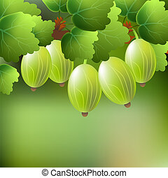 Green, juicy, sweet gooseberry on a branch for your design.