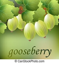 Green, juicy, sweet gooseberry on a branch for your design. Vector