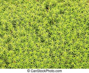 juniper moss background