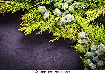 Green juniper twig with green cones lay on black slate.