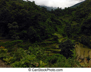 Green Landscape Filled with Rice Paddy Fields in the Himalayas